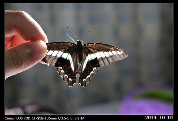 20141001_Butterfly3