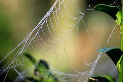 spider`s web