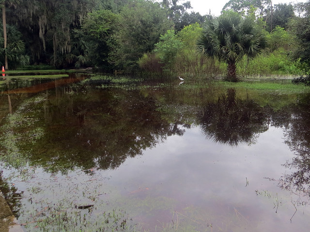 flooding at Gemini Springs