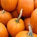Small photo of Pumpkin overload
