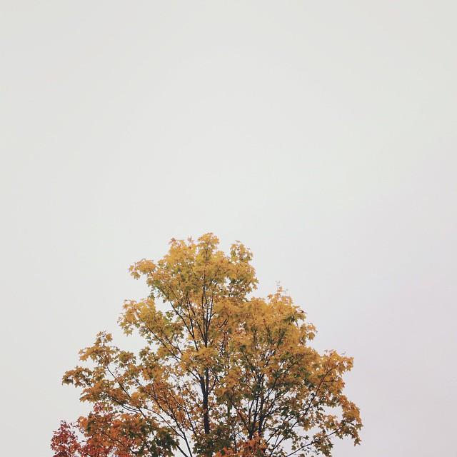 Autumn colors & rain