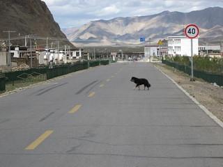 Dog crossing
