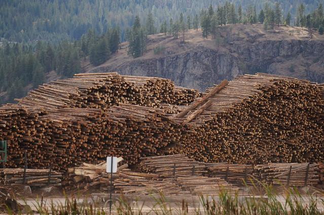Huge timber yard