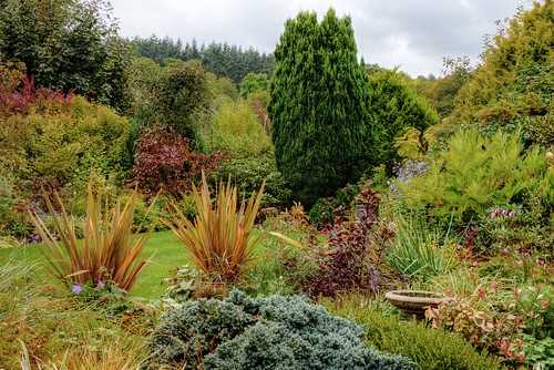 flowers trees red green fall yellow garden lawn autumncolours grasses shrubs borders mabjack