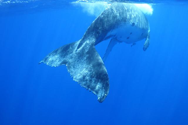 09202014 Calf Closeup (7)