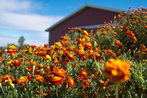 leica rural farm iowa agriculture leicax2