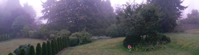 Foggy yard pano