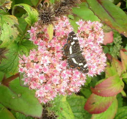 De Kruidhof 9 butterfly 2