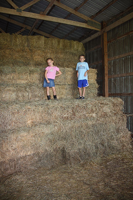 Up-high-on-hay