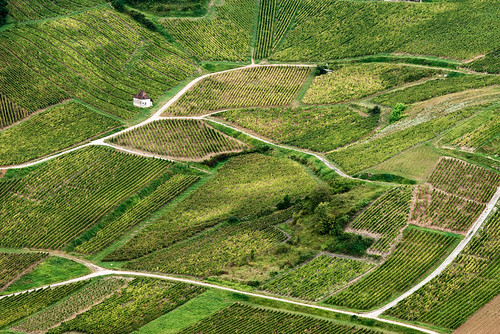 france green vineyard track angle flat burgundy perspective hut jura roads slope franchecomté dole incline châteauchalon