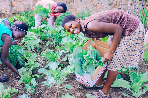 Uganda farmland diversifies crops to offer broader nutritional benefit for orphans, students