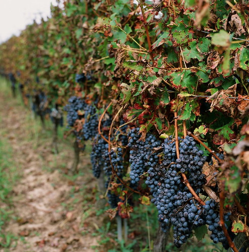 Minutes Before Harvest 2014
