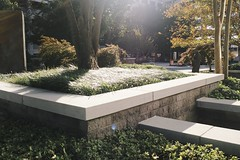 courtyard, garden, wall, grass, yard, landscaping, landscape,