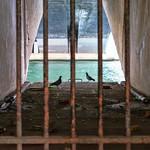 Les pigeons et la Seine