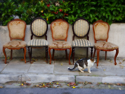5 chairs and a cat