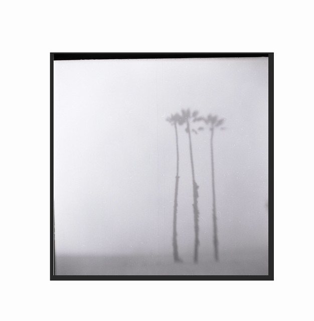 Seashore-palms on a foggy day