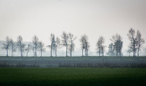 Trees in front of a hazy landscape