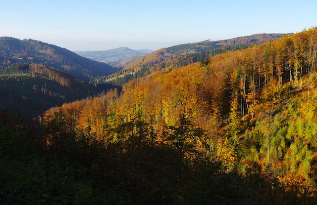 Autumn woods below Velký Stožek