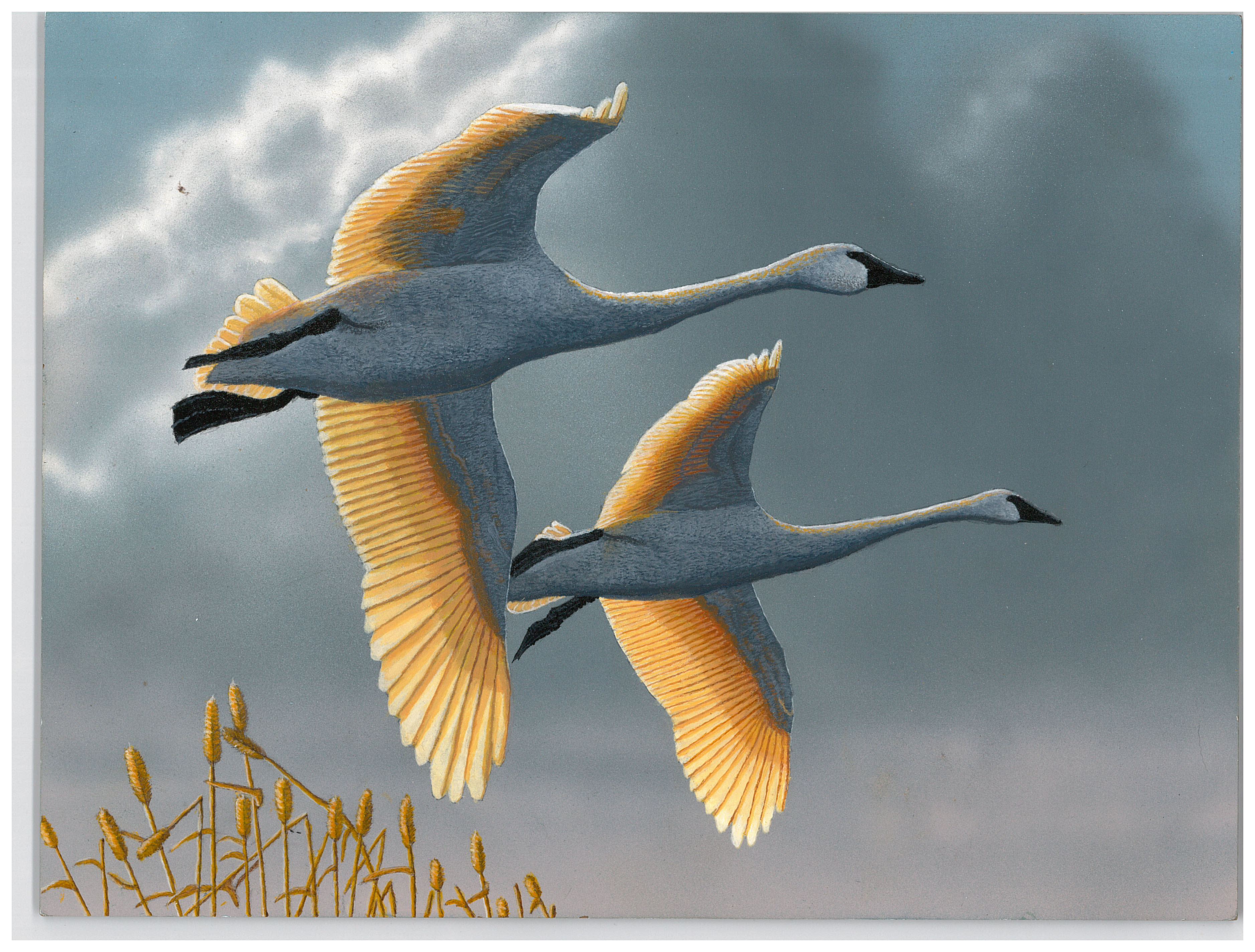 2016 Junior Duck Stamp Best of Show featuring Ross's geese