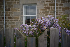 A window with wild flowers, Portgower