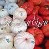 White or orange? What is your pumpkin choice? #fall #pumpkin