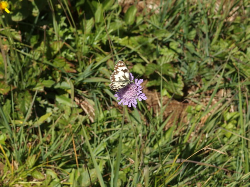 Butterfly @ Hike to Croix du Nivolet
