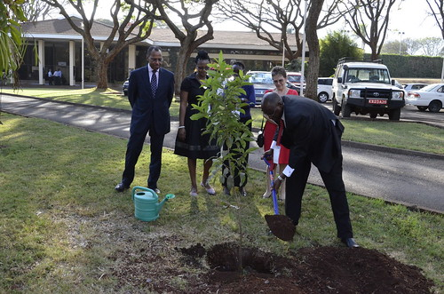 Bright Rwamirama, Honourable State Minister for Animal Industry, Uganda Ministry of Agriculture, Animal Industry and Fisheries, planted a tree at the ILRI@40 conference in Nairobi, 1 Oct 2014 (photo credit: ILRI/Samuel Mungai).