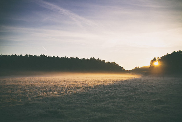 Morgonpromenad, Ursvik