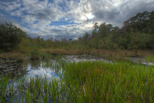 newjersey nj bog hdr partlycloudy 2014 capemaycounty canon1635l canon6d freshwaterwetlands tuckahoewma uppertwp