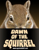 dawn of the squirrel