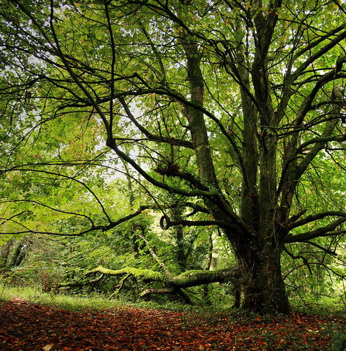 wood autumn trees ireland green leaves yellow forest donegal 2014 canon450d rossylongan