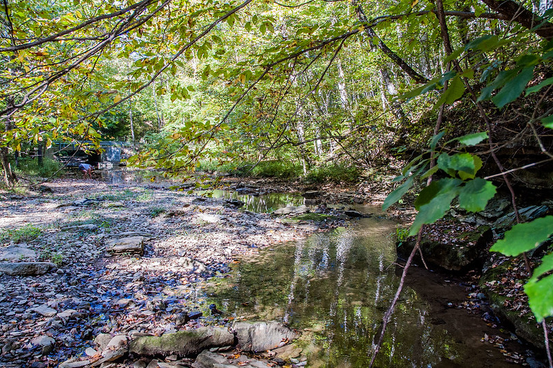 Mosquito Creek - Sally Reahard Woods