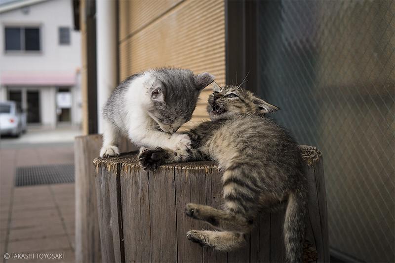 Cat Memories 2014/10/07