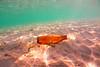 ثمة أوكسجين تحت الماء There oxygen underwater
