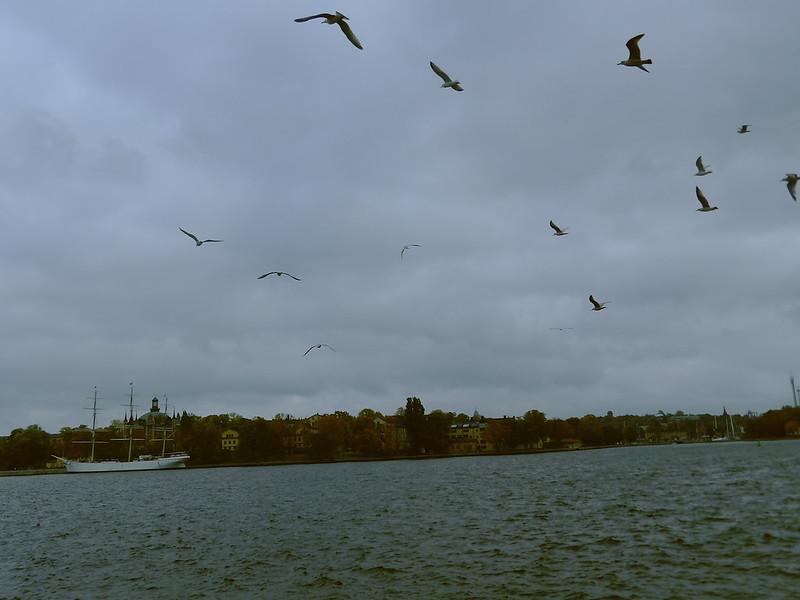 Gulls in Stockholm