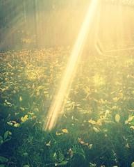 Ray Of Golden Light