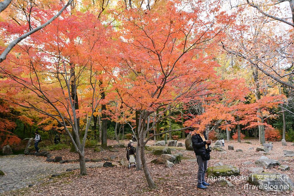 大阪赏枫 万博纪念公园 红叶庭园 07