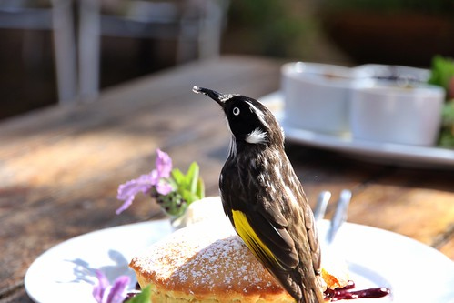 The Berry Farm near Margaret River: Dessert with Birdie