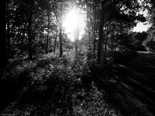 morning trees light urban blackandwhite bw sun forest sunrise sweden olympus örebro varberga sweron e620 dzuiko1442mmf3556kitlens 201409271354