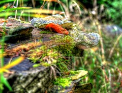 Tree stump. Lickeys.