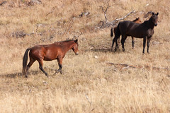 foal(0.0), hartebeest(0.0), grazing(0.0), animal(1.0), prairie(1.0), steppe(1.0), mare(1.0), pack animal(1.0), herd(1.0), horse(1.0), fauna(1.0), mustang horse(1.0), meadow(1.0), pasture(1.0), savanna(1.0), grassland(1.0), wildlife(1.0),