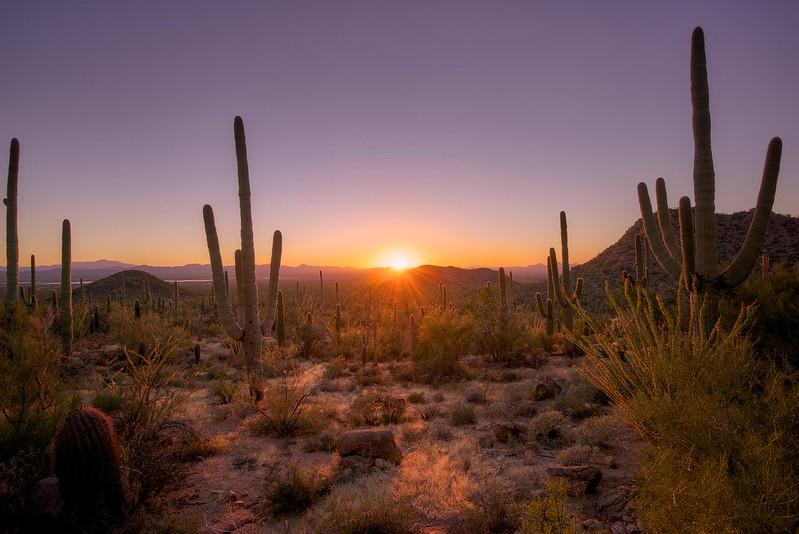 Sunset - Saguaro National Park