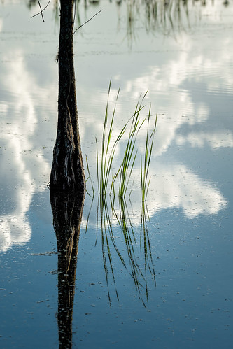blue sky panorama usa cloud white lake plant reflection tree green reed water landscape orlando florida cloudy calm clear cypress tamron centralflorida orlandowetlandspark 150600 edrosack