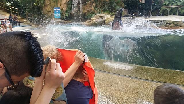 Sea lion show at the Splash Safari.