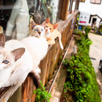 崖の上の猫 [ My IG: instagram.com/jonathan.leung_ ]