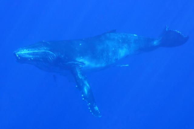 09202014 Calf Dive (2) Edit