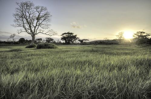 sunset grass nikon pastel sigma hdr vanuatu portvila sigma1020 elluk d7000 cloudsstormssunsetssunrises