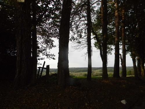 trees with a view
