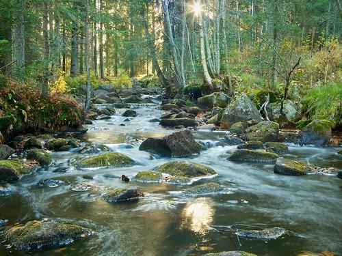 autumn trees sun white nature water leaves creek forest finland river october stream rapid bryophyte raahe pattijoki ylipää lasikangas