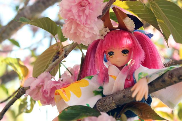 pink tree tamaki